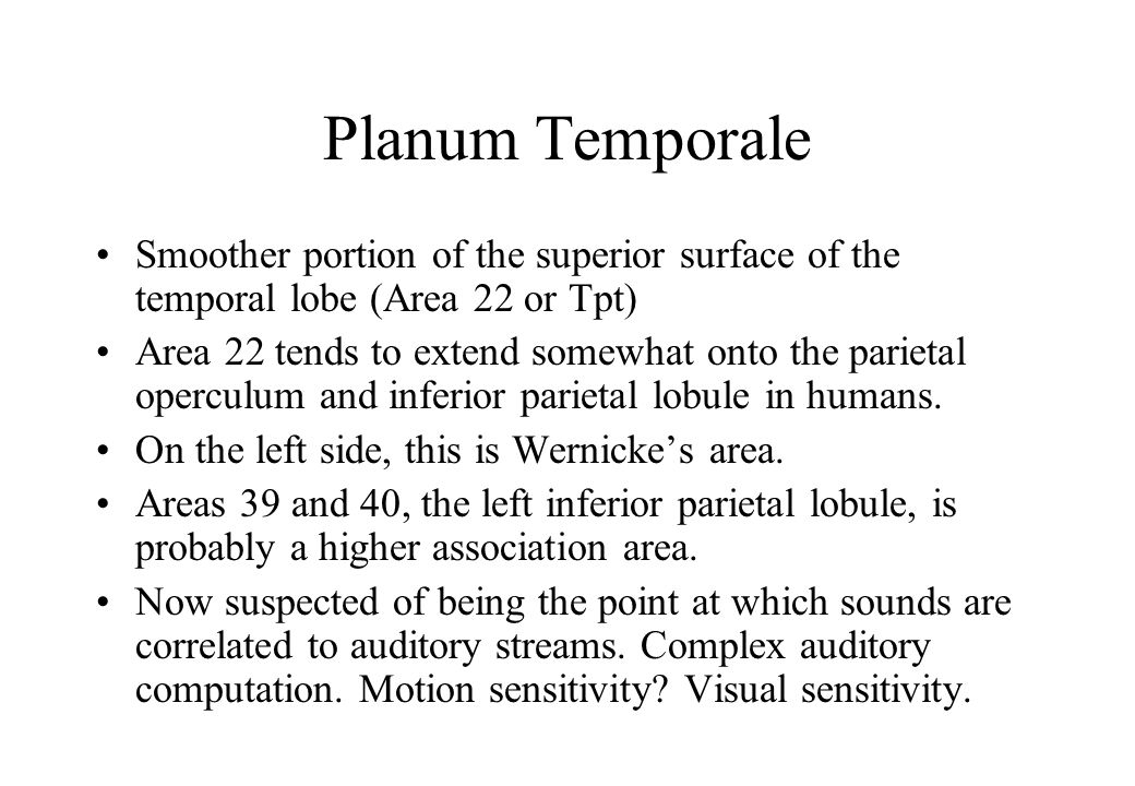 Planum Temporale Smoother portion of the superior surface of the temporal lobe (Area 22 or Tpt) Area 22 tends to extend somewhat onto the parietal operculum and inferior parietal lobule in humans.