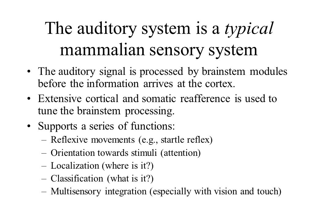 The auditory system is a typical mammalian sensory system The auditory signal is processed by brainstem modules before the information arrives at the cortex.