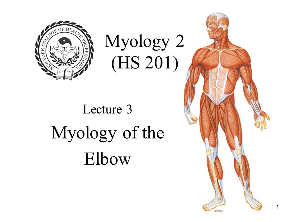 1 Myology 2 (HS 201) Lecture 3 Myology of the Elbow
