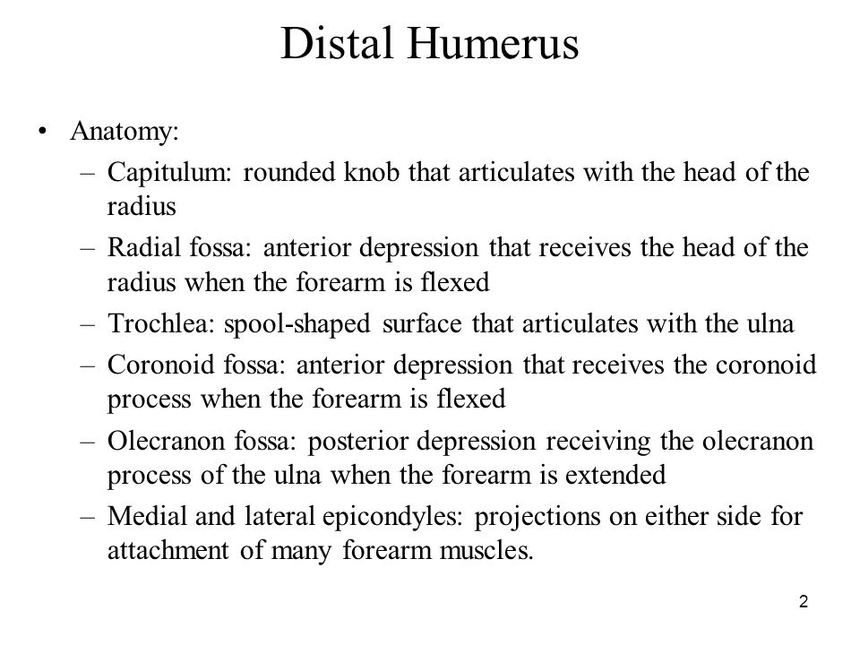 3 Anatomical Review Distal Humerus