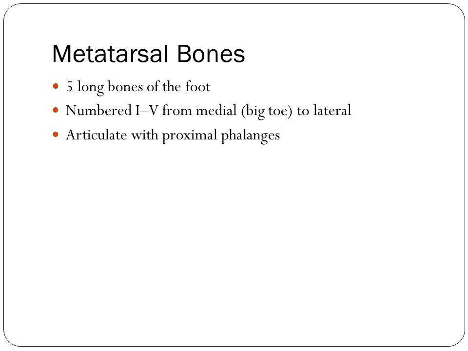 Metatarsal Bones 5 long bones of the foot Numbered I–V from medial (big toe) to lateral Articulate with proximal phalanges