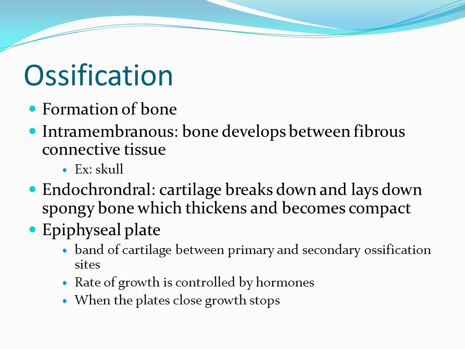Ossification Formation of bone Intramembranous: bone develops between fibrous connective tissue Ex: skull Endochrondral: cartilage breaks down and lay