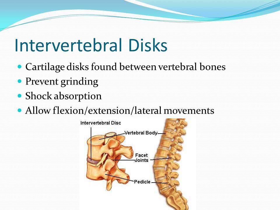 Intervertebral Disks Cartilage disks found between vertebral bones Prevent grinding Shock absorption Allow flexion/extension/lateral movements