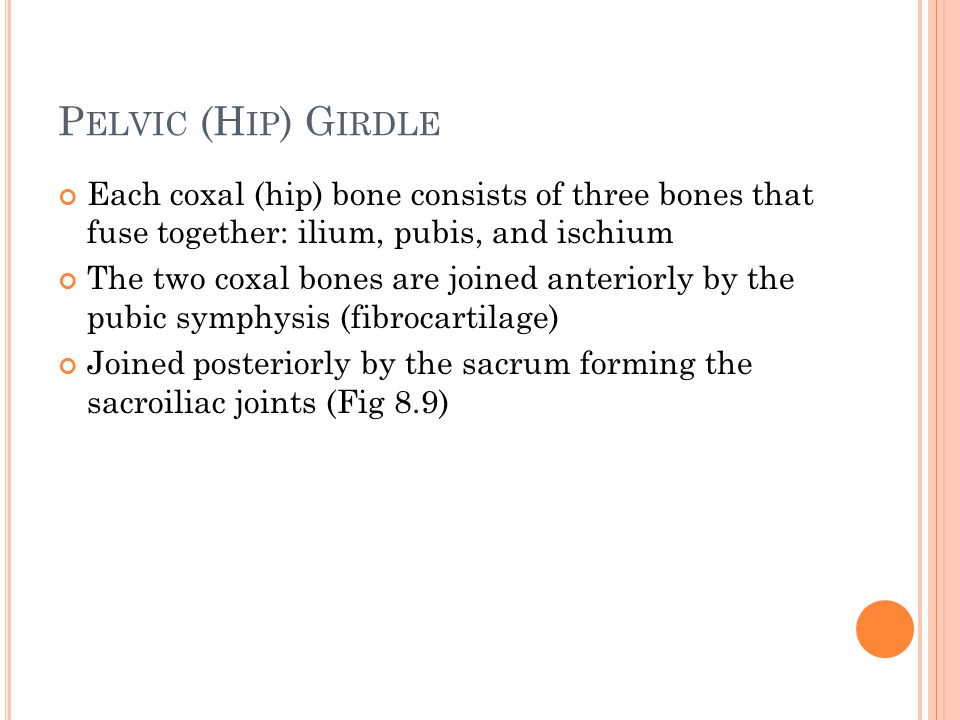 P ELVIC (H IP ) G IRDLE Each coxal (hip) bone consists of three bones that fuse together: ilium, pubis, and ischium The two coxal bones are joined anteriorly by the pubic symphysis (fibrocartilage) Joined posteriorly by the sacrum forming the sacroiliac joints (Fig 8.9)