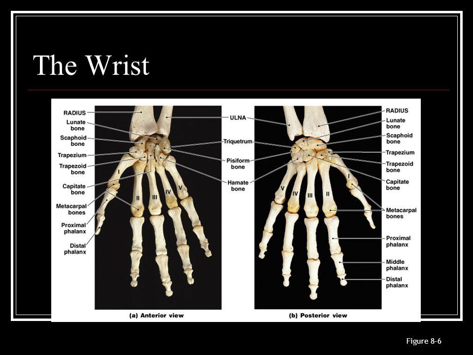 The Wrist Figure 8–6