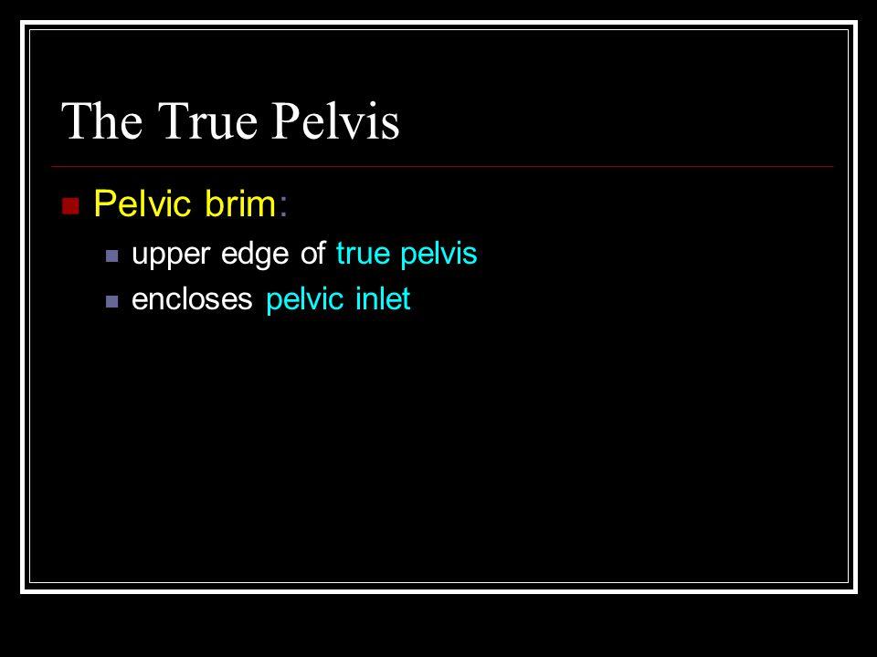 The True Pelvis Pelvic brim: upper edge of true pelvis encloses pelvic inlet