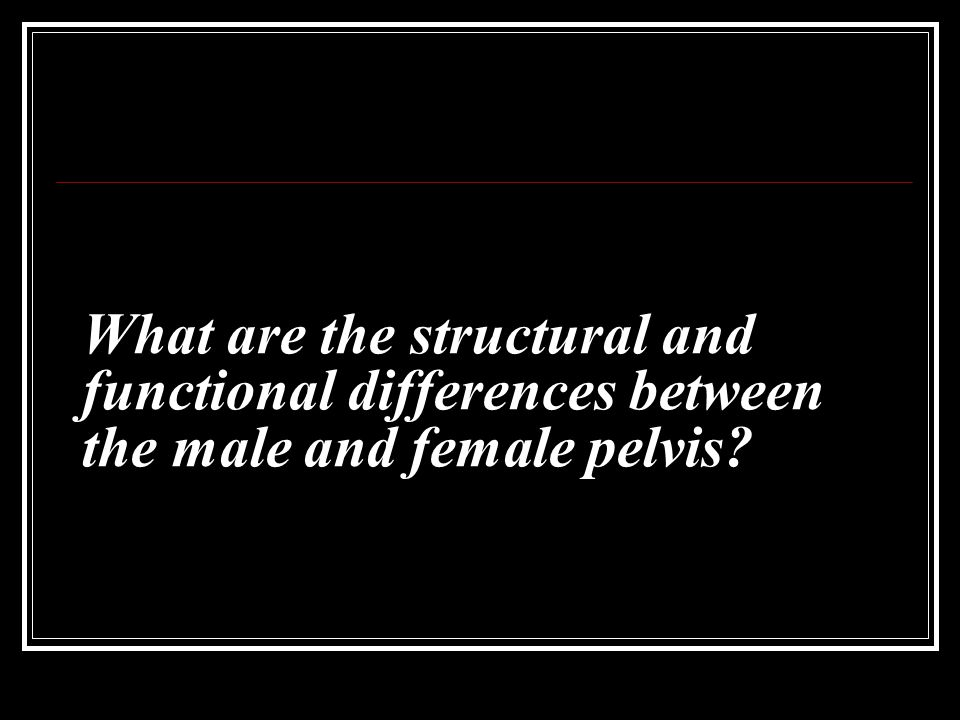What are the structural and functional differences between the male and female pelvis?