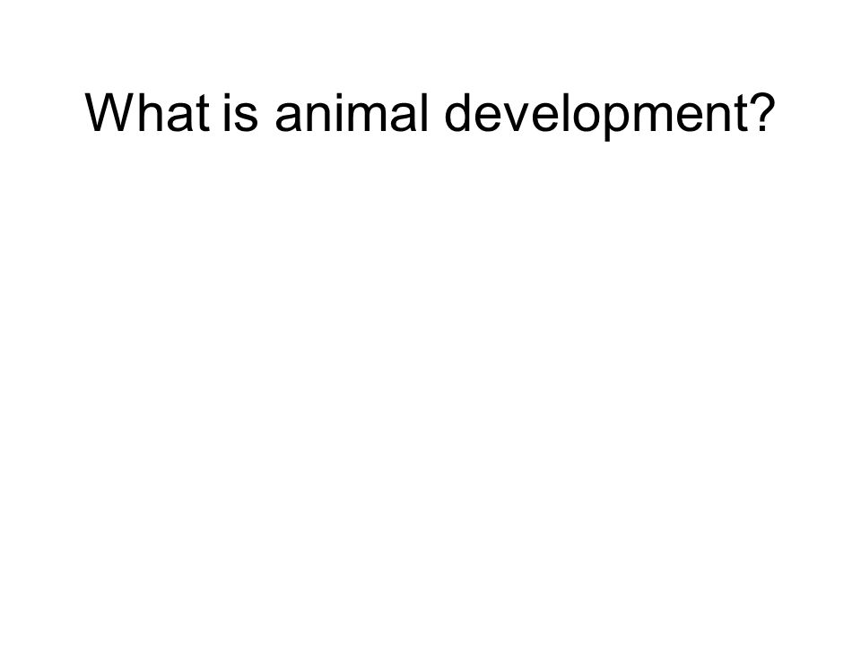 What is animal development