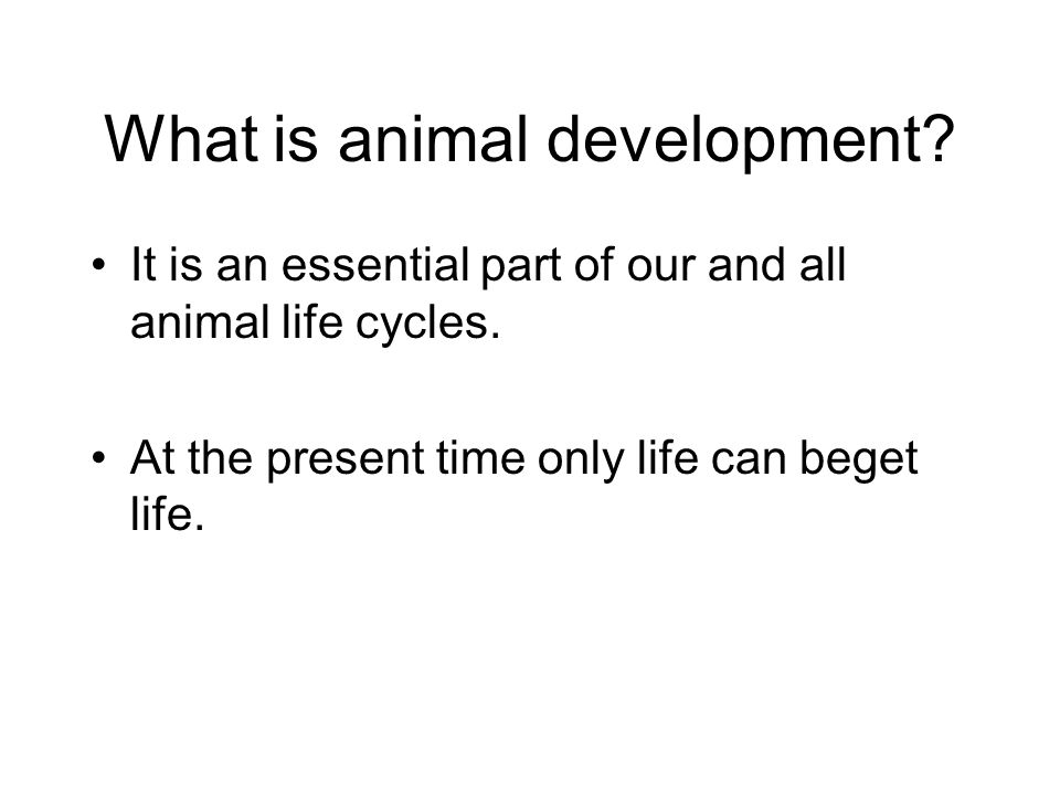 What is animal development. It is an essential part of our and all animal life cycles.