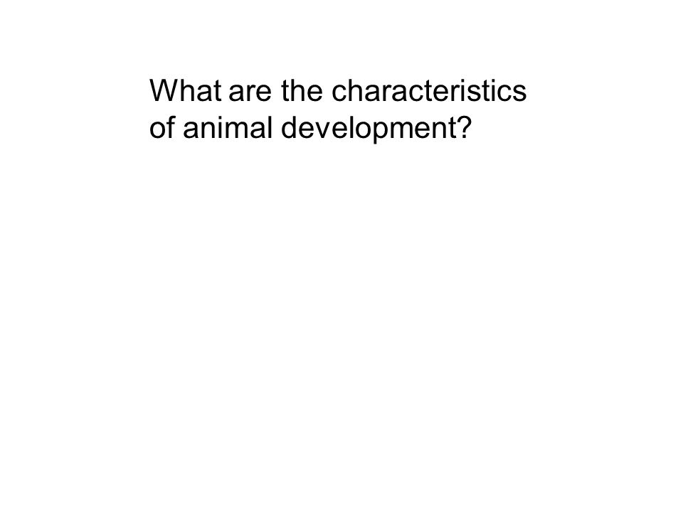 What are the characteristics of animal development