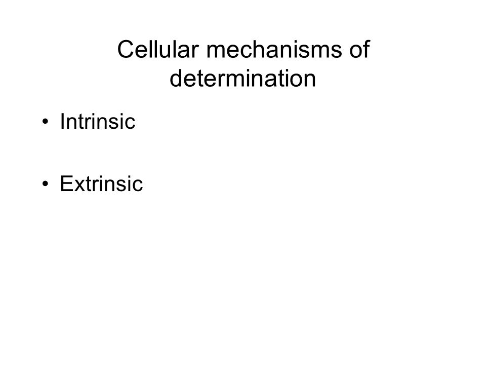 Cellular mechanisms of determination Intrinsic Extrinsic