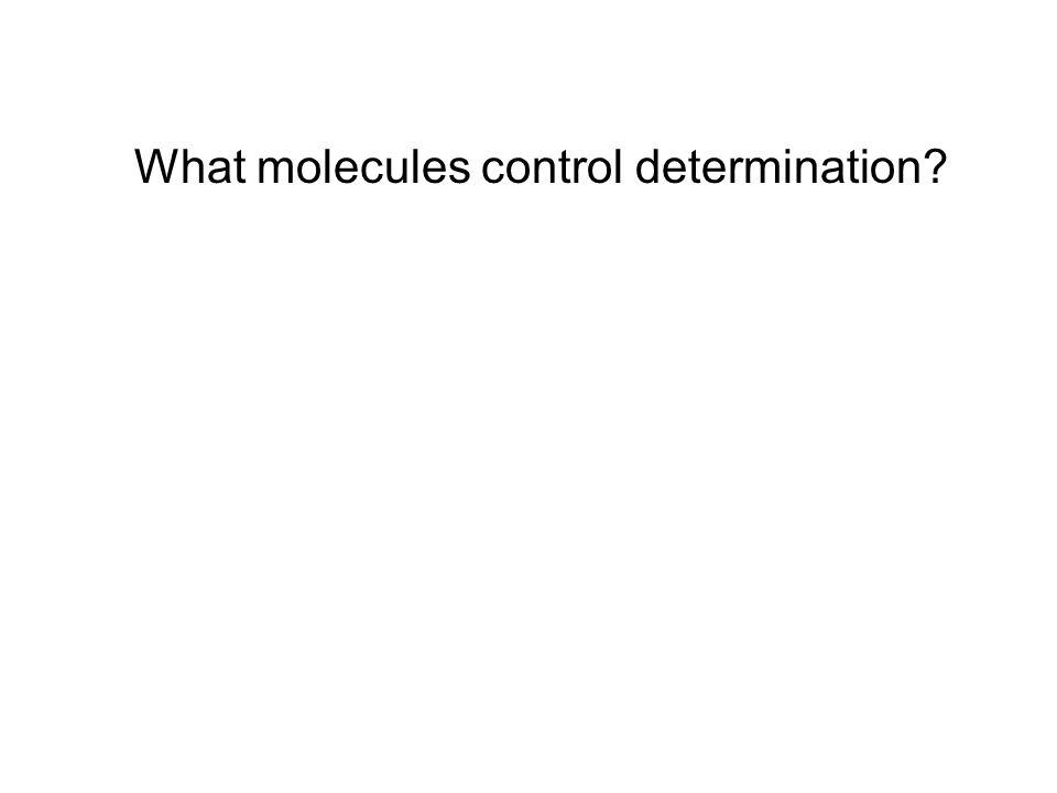 What molecules control determination