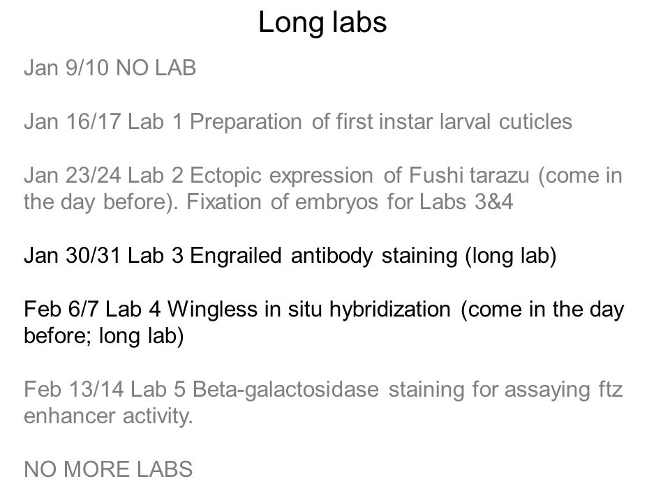 Jan 9/10 NO LAB Jan 16/17 Lab 1 Preparation of first instar larval cuticles Jan 23/24 Lab 2 Ectopic expression of Fushi tarazu (come in the day before).