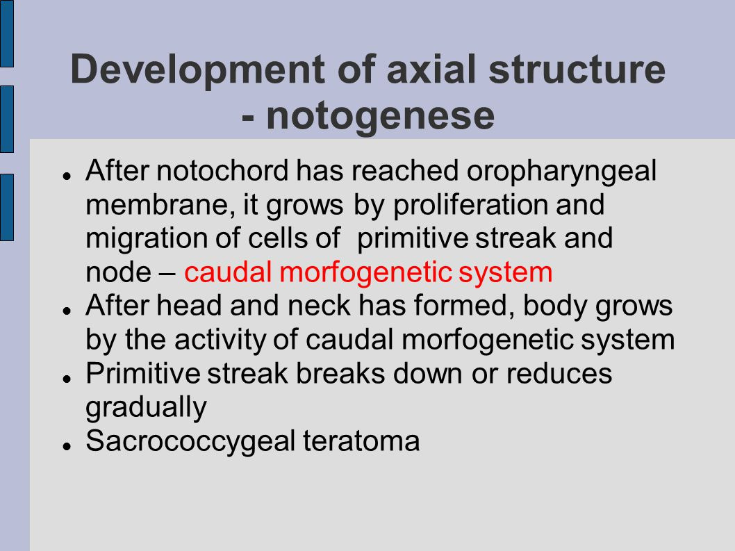 Development of axial structure - notogenese After notochord has reached oropharyngeal membrane, it grows by proliferation and migration of cells of primitive streak and node – caudal morfogenetic system After head and neck has formed, body grows by the activity of caudal morfogenetic system Primitive streak breaks down or reduces gradually Sacrococcygeal teratoma