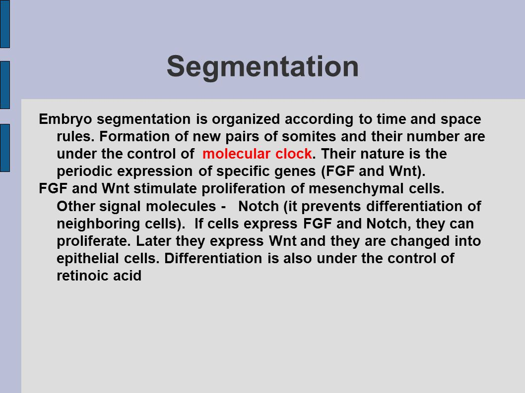 Segmentation Embryo segmentation is organized according to time and space rules.