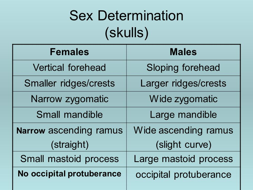Sex Determination (skulls) FemalesMales Vertical foreheadSloping forehead Smaller ridges/crestsLarger ridges/crests Narrow zygomaticWide zygomatic Small mandibleLarge mandible Narrow ascending ramus (straight) Wide ascending ramus (slight curve) Small mastoid processLarge mastoid process No occipital protuberance occipital protuberance