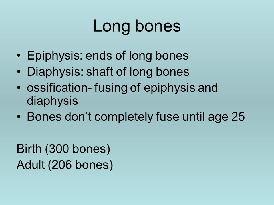 Long bones Epiphysis: ends of long bones Diaphysis: shaft of long bones ossification- fusing of epiphysis and diaphysis Bones don't completely fuse until age 25 Birth (300 bones) Adult (206 bones)