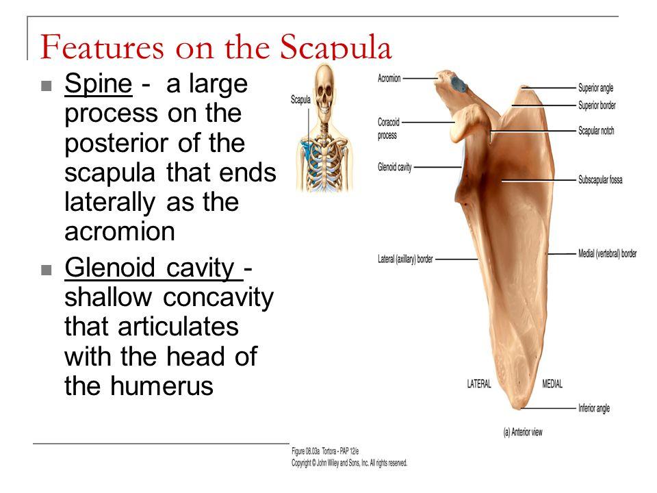 Right Lower Limb Figure 8.12