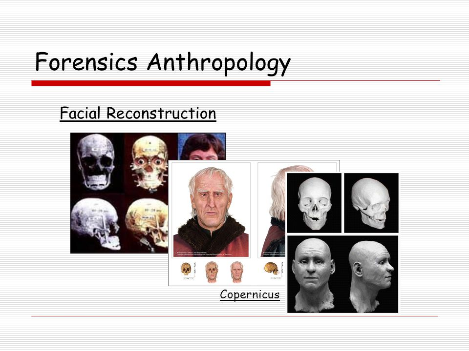 Forensics Anthropology Facial Reconstruction Copernicus