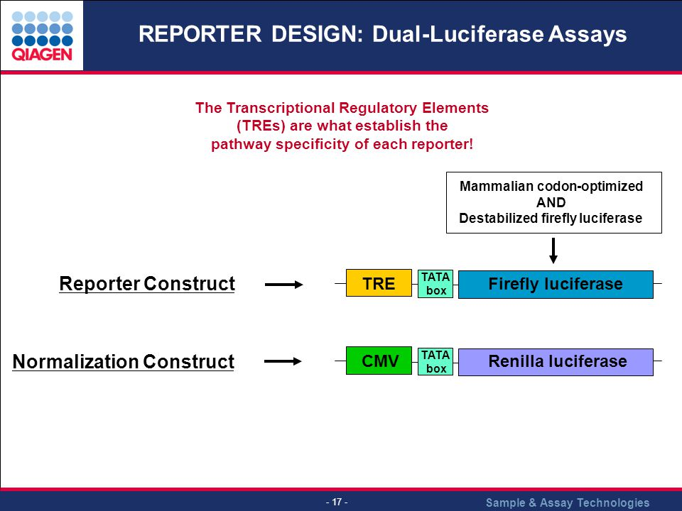 Sample & Assay Technologies - 17 - REPORTER DESIGN: Dual-Luciferase Assays Reporter Construct Firefly luciferase TATA box TRERenilla luciferase TATA box CMV Normalization Construct Mammalian codon-optimized AND Destabilized firefly luciferase The Transcriptional Regulatory Elements (TREs) are what establish the pathway specificity of each reporter!