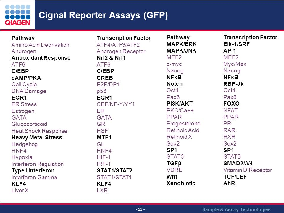 Sample & Assay Technologies - 22 - Cignal Reporter Assays (GFP) PathwayTranscription Factor Amino Acid Deprivation ATF4/ATF3/ATF2 Androgen Androgen Receptor Antioxidant Response Nrf2 & Nrf1 ATF6 ATF6 C/EBP cAMP/PKA CREB Cell Cycle E2F/DP1 DNA Damage p53 EGR1 EGR1 ER Stress CBF/NF-Y/YY1 Estrogen ER GATA Glucocorticoid GR Heat Shock Response HSF Heavy Metal Stress MTF1 HedgehogGliHNF4 Hypoxia HIF-1 Interferon RegulationIRF-1 Type I Interferon STAT1/STAT2 Interferon Gamma STAT1/STAT1KLF4 Liver XLXR PathwayTranscription Factor MAPK/ERK Elk-1/SRF MAPK/JNK AP-1 MEF2 MEF2 c-myc Myc/MaxNanog NFκB NFκB Notch RBP-Jk Oct4 Oct4 Pax6 PI3K/AKT FOXO PKC/Ca++ NFAT PPAR PPAR ProgesteronePR Retinoic Acid RAR Retinoid XRXRSox2 SP1 SP1 STAT3 STAT3 TGFβ SMAD2/3/4 VDRE Vitamin D Receptor Wnt TCF/LEF XenobioticAhR