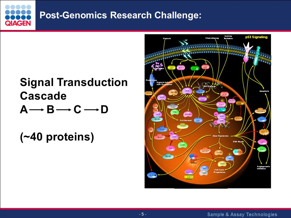 Sample & Assay Technologies - 5 - Post-Genomics Research Challenge: Signal Transduction Cascade A B C D (~40 proteins)