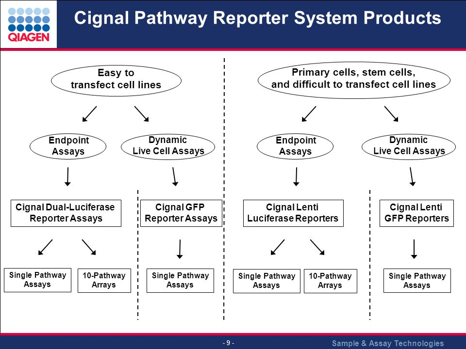 Sample & Assay Technologies - 9 - Cignal Pathway Reporter System Products Easy to transfect cell lines Primary cells, stem cells, and difficult to transfect cell lines Endpoint Assays Endpoint Assays Dynamic Live Cell Assays Dynamic Live Cell Assays Cignal Dual-Luciferase Reporter Assays Cignal Lenti Luciferase Reporters Cignal GFP Reporter Assays Cignal Lenti GFP Reporters Single Pathway Assays Single Pathway Assays Single Pathway Assays Single Pathway Assays 10-Pathway Arrays 10-Pathway Arrays
