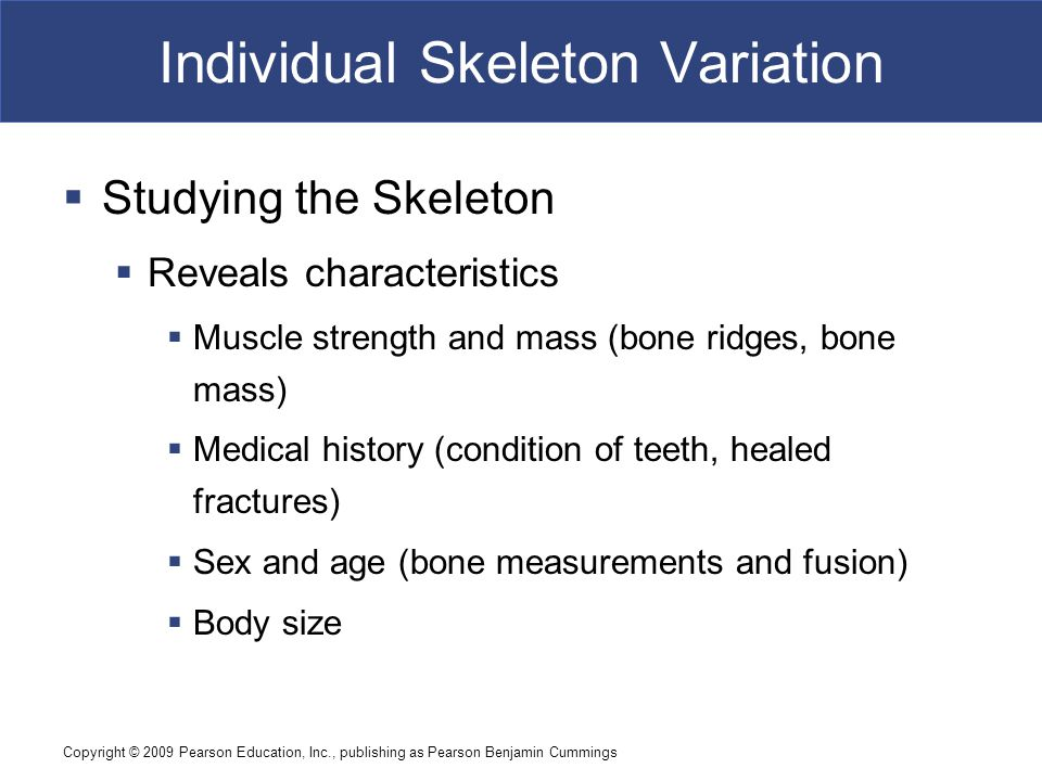 Copyright © 2009 Pearson Education, Inc., publishing as Pearson Benjamin Cummings Individual Skeleton Variation  Studying the Skeleton  Reveals char