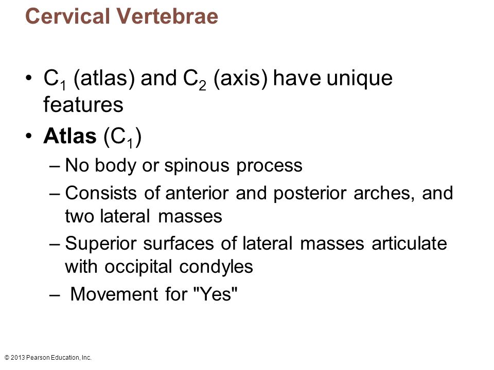 © 2013 Pearson Education, Inc. Cervical Vertebrae C 1 (atlas) and C 2 (axis) have unique features Atlas (C 1 ) –No body or spinous process –Consists o