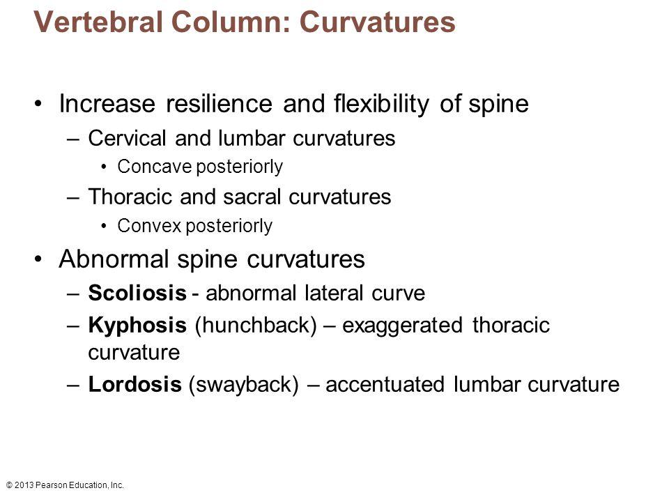© 2013 Pearson Education, Inc.Figure 7.16 The vertebral column.