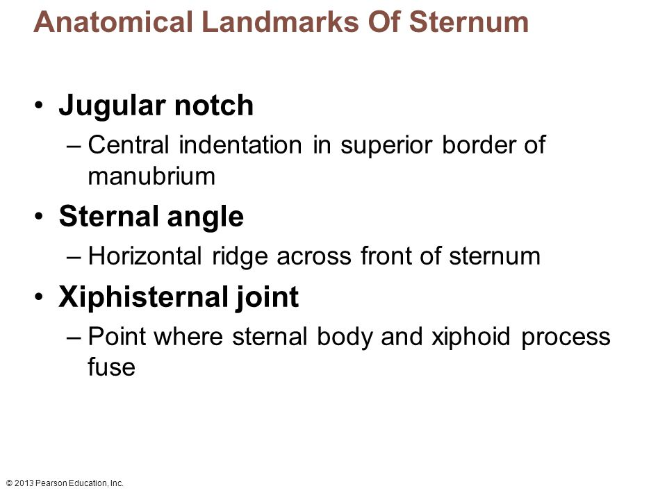 © 2013 Pearson Education, Inc. Anatomical Landmarks Of Sternum Jugular notch –Central indentation in superior border of manubrium Sternal angle –Horiz