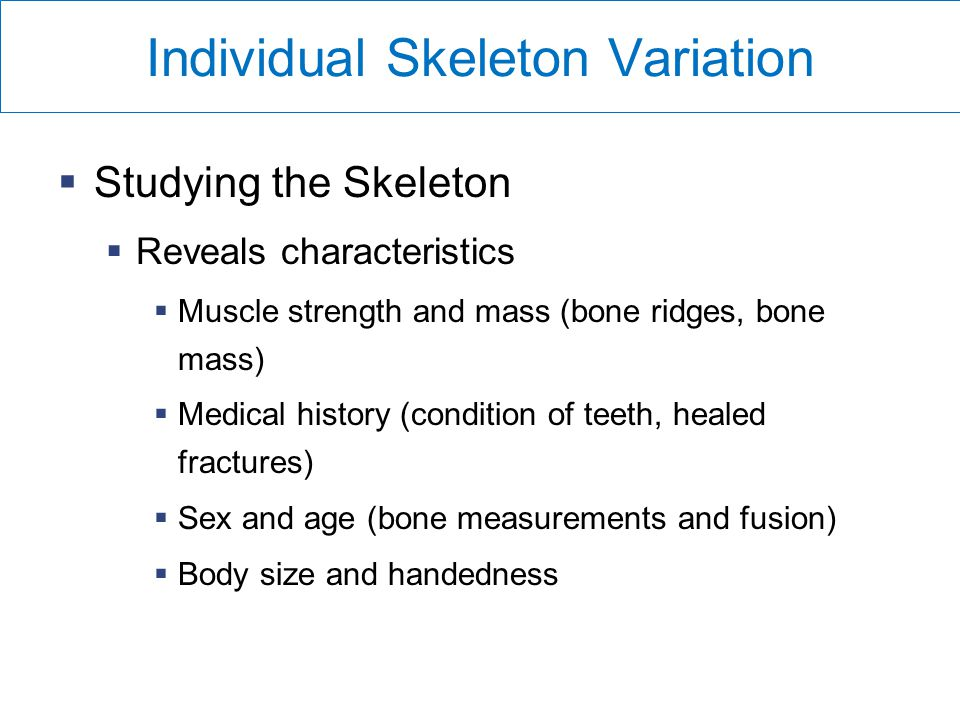 Individual Skeleton Variation  Studying the Skeleton  Reveals characteristics  Muscle strength and mass (bone ridges, bone mass)  Medical history (condition of teeth, healed fractures)  Sex and age (bone measurements and fusion)  Body size and handedness