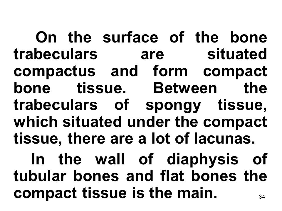 34 On the surface of the bone trabeculars are situated compactus and form compact bone tissue.