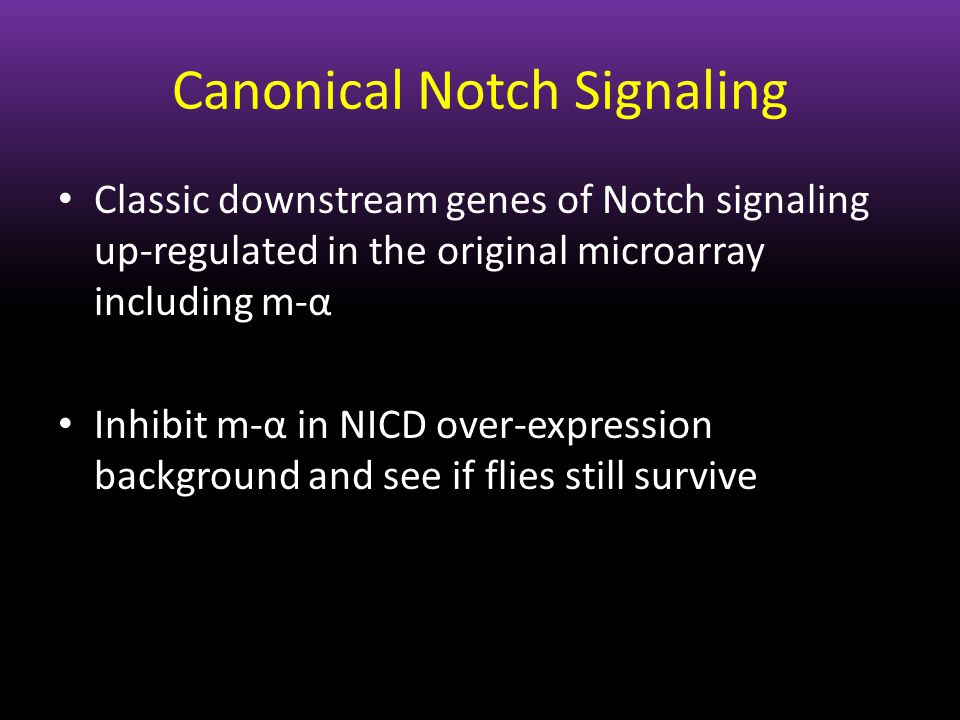 Canonical Notch Signaling Classic downstream genes of Notch signaling up-regulated in the original microarray including m-α Inhibit m-α in NICD over-e