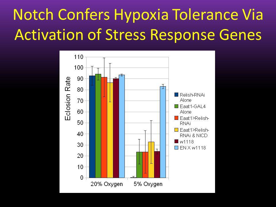 Notch Confers Hypoxia Tolerance Via Activation of Stress Response Genes