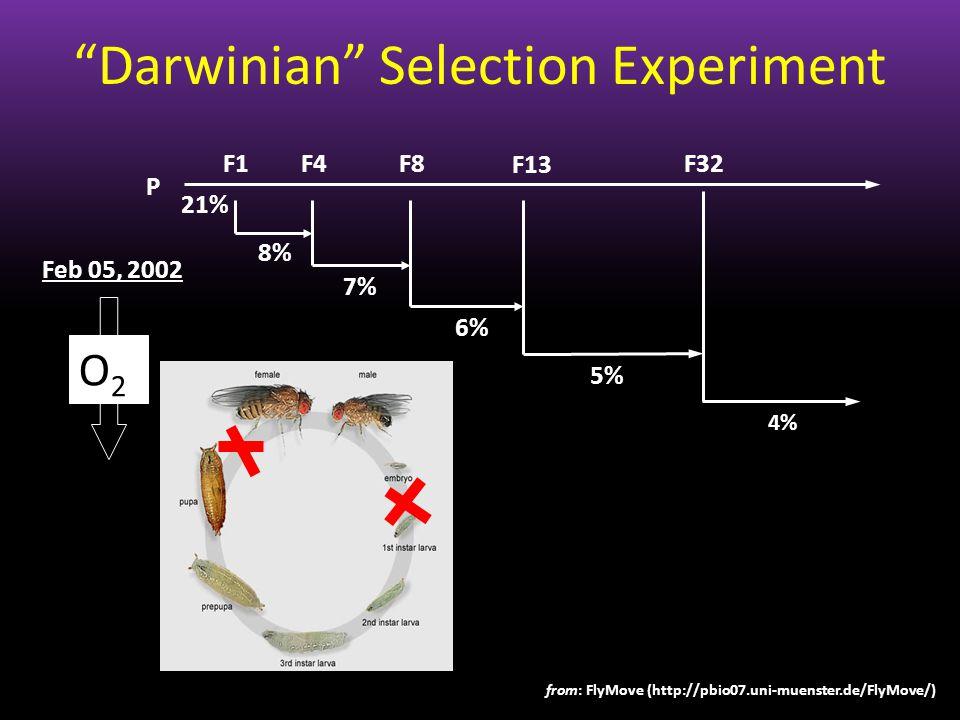 F1F4F8 F13 8% 7% 6% 5% 4% P 21% F32 O2O2 Feb 05, 2002 Darwinian Selection Experiment from: FlyMove (http://pbio07.uni-muenster.de/FlyMove/)