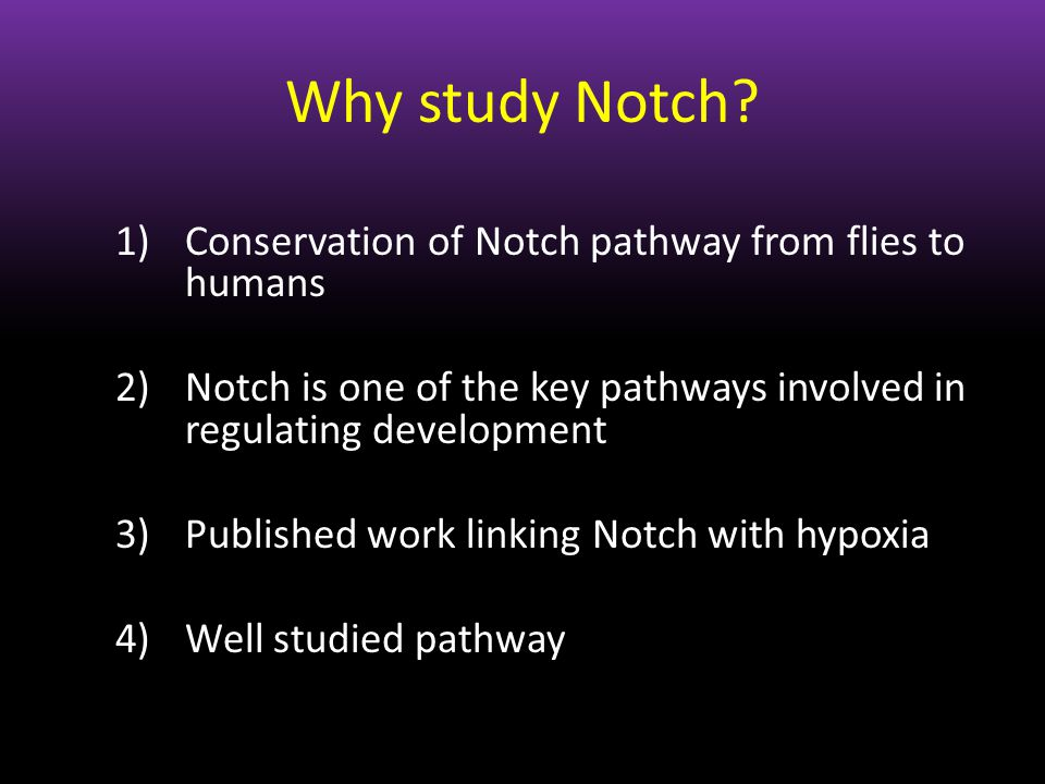 Why study Notch? 1)Conservation of Notch pathway from flies to humans 2)Notch is one of the key pathways involved in regulating development 3)Publishe