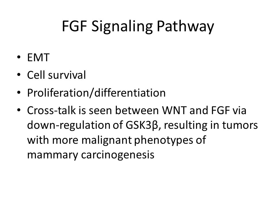FGF Signaling Pathway EMT Cell survival Proliferation/differentiation Cross-talk is seen between WNT and FGF via down-regulation of GSK3β, resulting i