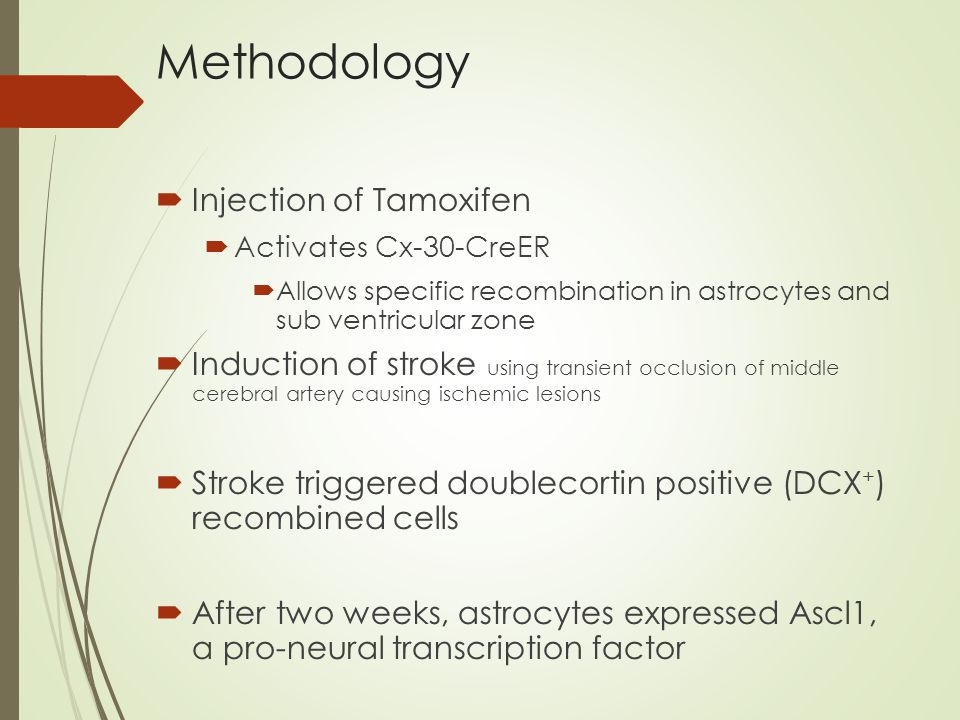Methodology  Injection of Tamoxifen  Activates Cx-30-CreER  Allows specific recombination in astrocytes and sub ventricular zone  Induction of stroke using transient occlusion of middle cerebral artery causing ischemic lesions  Stroke triggered doublecortin positive (DCX + ) recombined cells  After two weeks, astrocytes expressed Ascl1, a pro-neural transcription factor