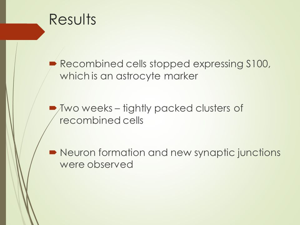  Recombined cells stopped expressing S100, which is an astrocyte marker  Two weeks – tightly packed clusters of recombined cells  Neuron formation