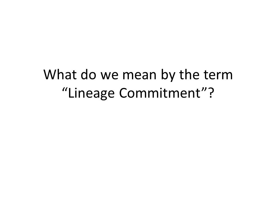 What do we mean by the term Lineage Commitment
