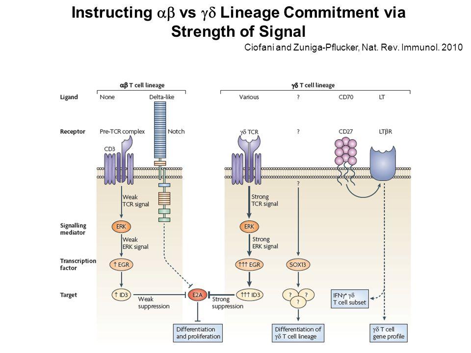 Instructing  vs  Lineage Commitment via Strength of Signal Ciofani and Zuniga-Pflucker, Nat.
