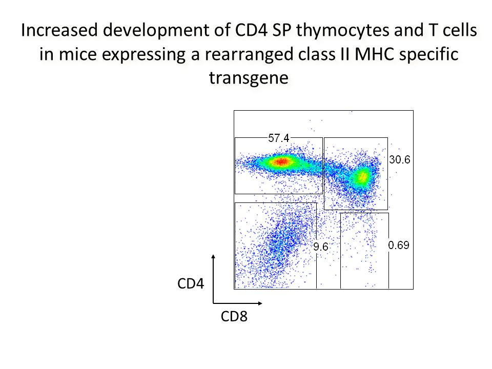 Increased development of CD4 SP thymocytes and T cells in mice expressing a rearranged class II MHC specific transgene CD8 CD4