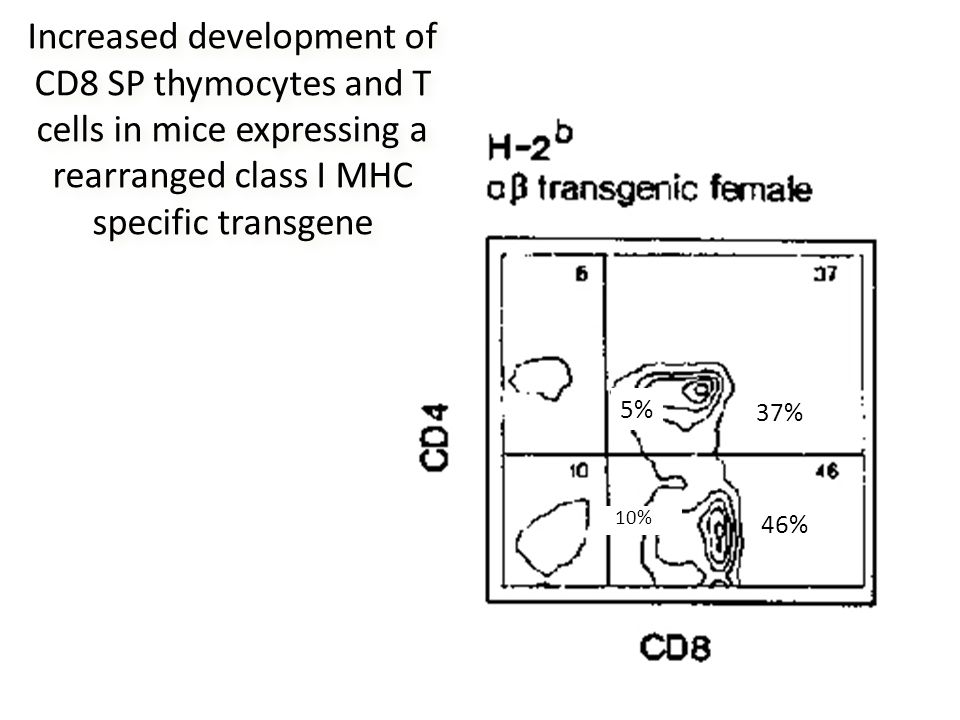 5% 37% 46% 10% Increased development of CD8 SP thymocytes and T cells in mice expressing a rearranged class I MHC specific transgene