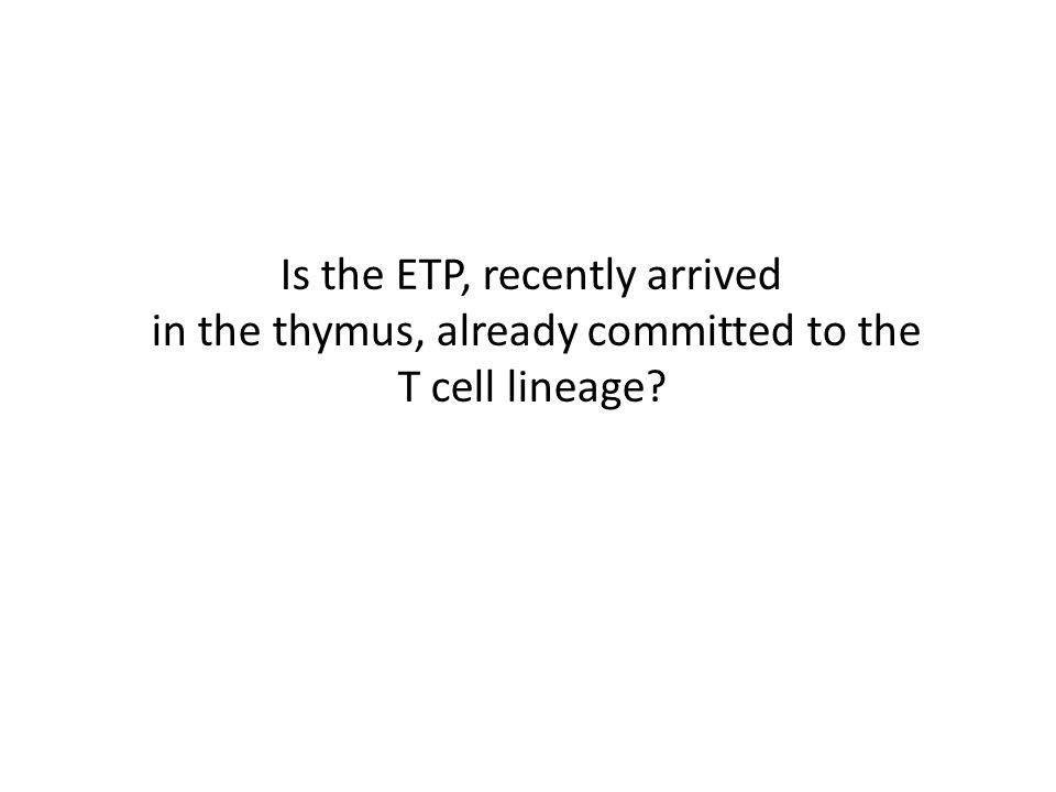 Is the ETP, recently arrived in the thymus, already committed to the T cell lineage