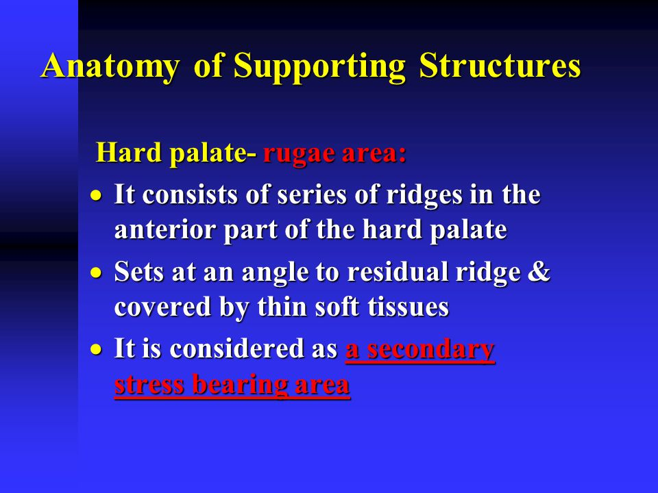 Maxillary Arch Anatomy