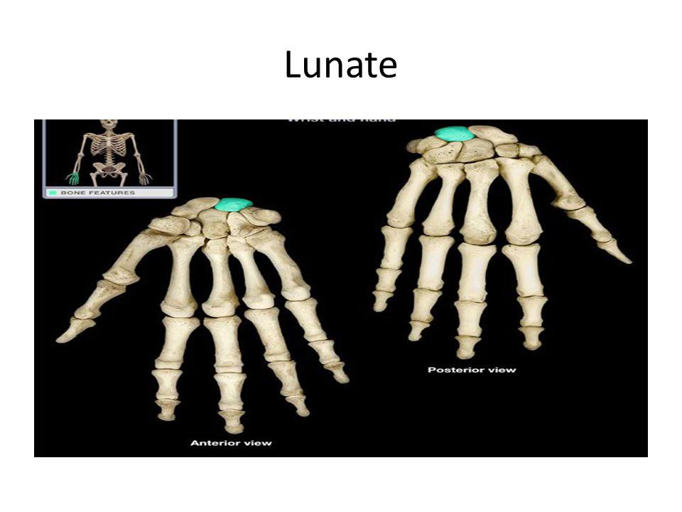 Lunate