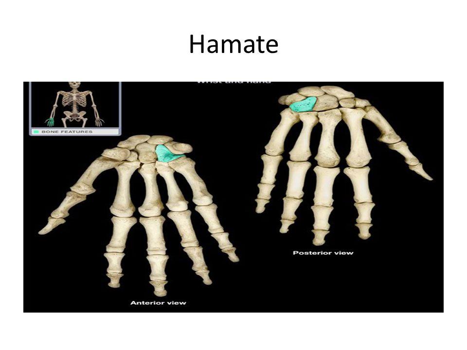 Hamate