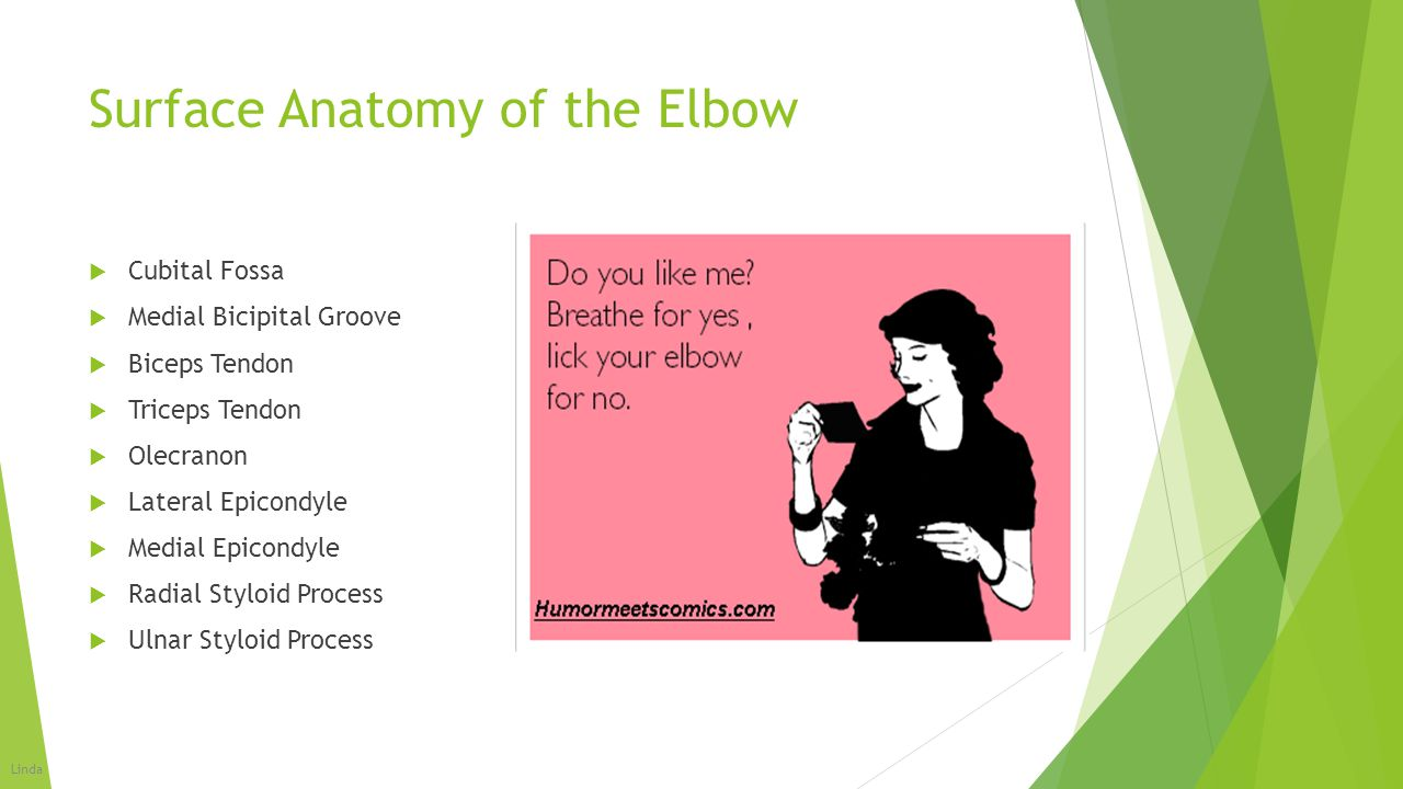 Surface Anatomy of the Elbow  Cubital Fossa  Medial Bicipital Groove  Biceps Tendon  Triceps Tendon  Olecranon  Lateral Epicondyle  Medial Epic