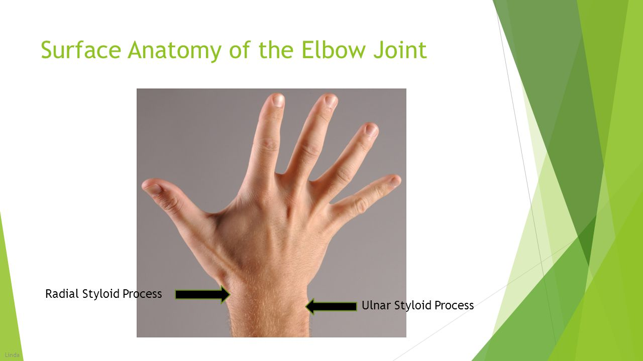 Surface Anatomy of the Elbow Joint  When arms are at your sides, palms facing forward, you hands and forearms should be about 5-15 degrees away from your body.